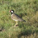 Bird, Kaudulla National Park, Sri Lanka