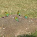 Birds, Kaudulla National Park, Sri Lanka