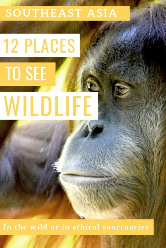 12 ethical places to see wildlife in Southeast Asia #travel #asia #SEA #animal #wildlife #nationalparks #sanctuaries