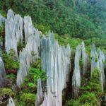 Pinnacles in Gunung Mulu National Park, Sarawak, Malaysia