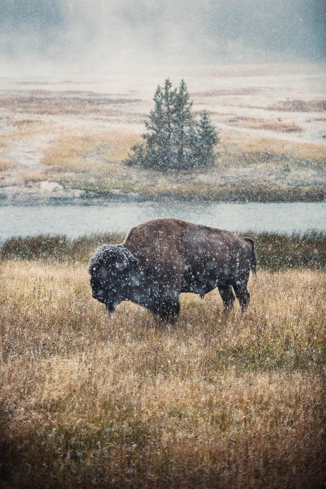 Yellowstone in winter, best USA winter getaways