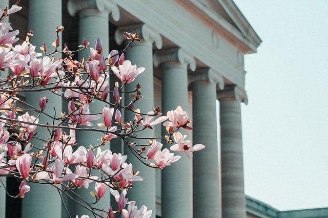 Washington DC, Cherry blossoms